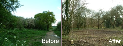 Orchard before and after